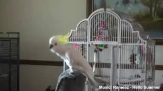 Zwierzęta tańczą!  😺