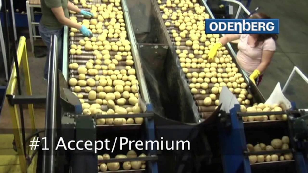 Yellow potato sorting machine Titan II - TOMRA Sorting