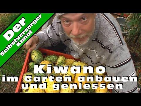 Kiwano im Garten anbauen und geniessen
