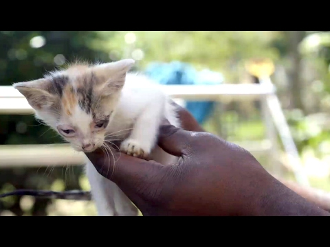 These Precious Kittens Were Saved From Drowning By Their Mom   The Guardians