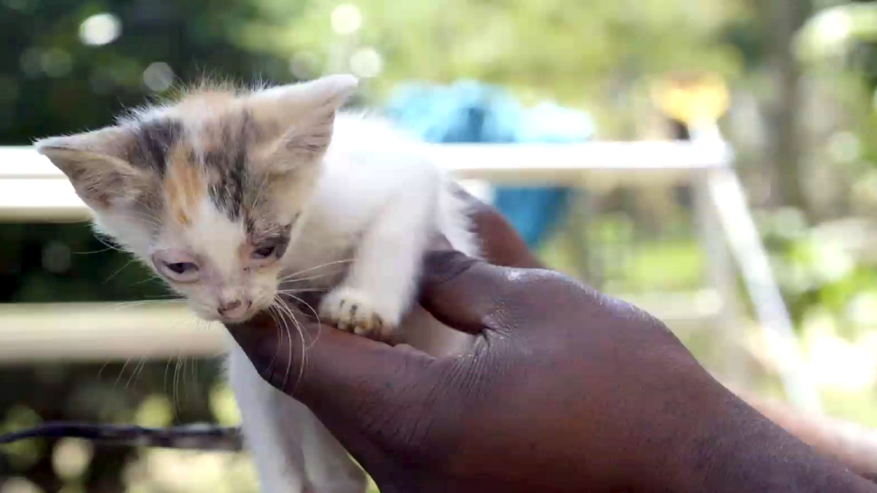 These Precious Kittens Were Saved From Drowning By Their Mom The Guardians Youtube