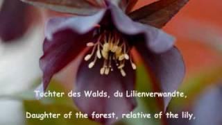 Hugo Wolf Eduard Mörike Auf Eine Christblume