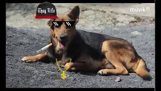 [Phim Ngắn Hài Hước] - Ai trong đời cũng từng sợ chó   Giới trẻ thác loạn