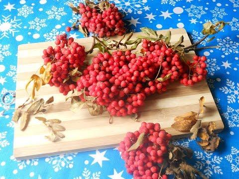 Как заготовить красную рябину на зиму