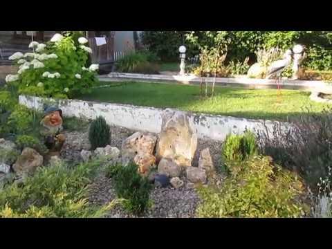 Декоративные кустарники в моем саду. Легкий в уходе. КИЗИЛЬНИК. Для вашего сада