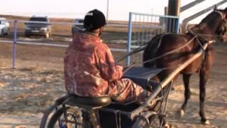 Лошадь заработала 20 миллиардов рублей
