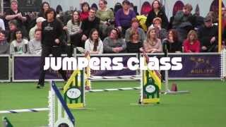 Wow! Jumpers 2014 Westminster Kennel Club Agility Masters Championships