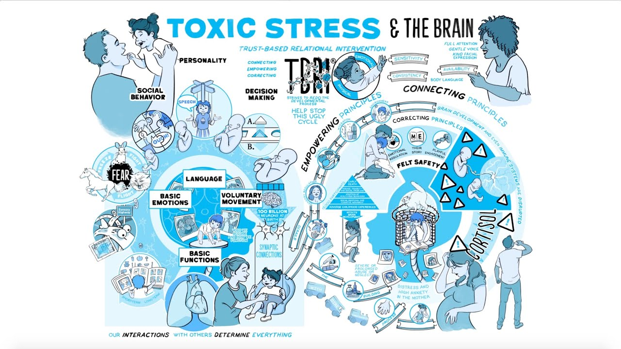 Toxic Stress and The Brain
