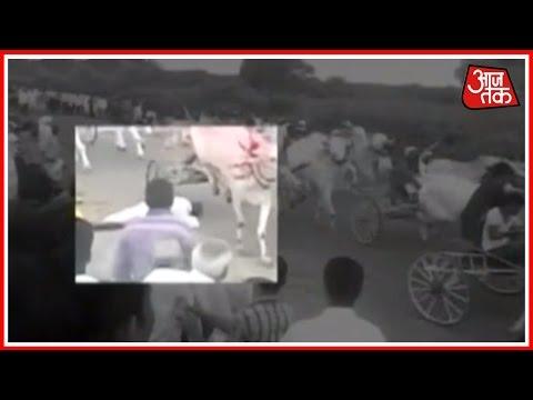 Man Gets Mowed Down By Bullock Carts In Vijaypur, Karnataka