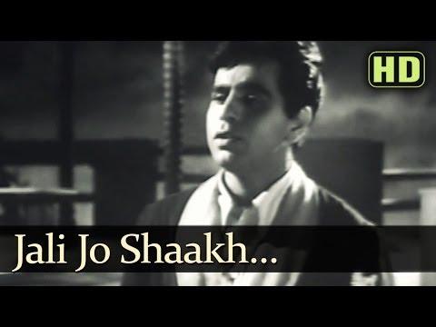 Jali Jo Shaakh HD  Tarana Songs  Dilip Kumar  Madhubala  Talat Mahmood