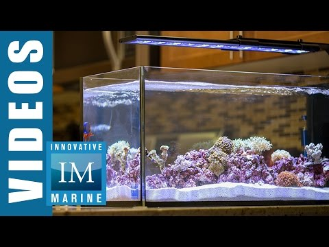 Peninsula Style Aquascaping - Peninsula 20 Gallon by Innovative Marine