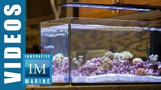Peninsula Style Aquascaping - Peninsula 20 Gallon by Innovative Marine
