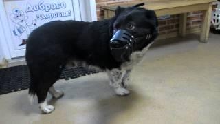 Голоденко Дружок после операции — Ветеринарная клиника