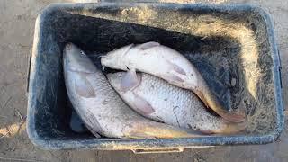 Запуск рыбы в Пищулино 25 октября 2019г