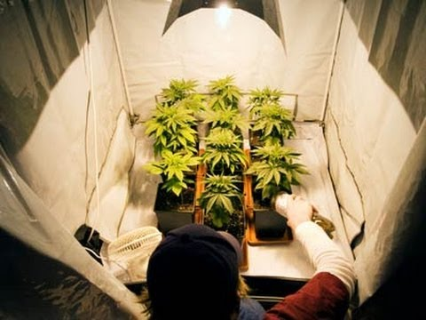 How To Grow Cannabis Marijuana Indoors   Vol 1   Full Tutorial