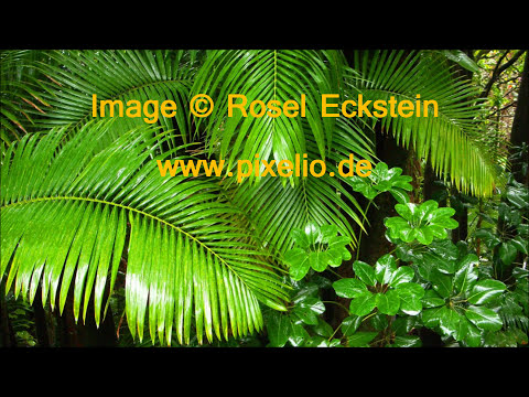 In The Rainforest │ Tropical Ambience