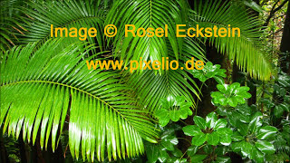Voices in the Tropical Rainforest │ Ambient Sounds
