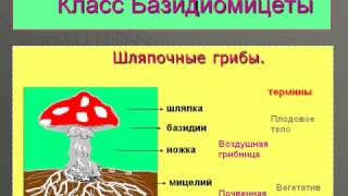 Общая характеристика грибов, их многообразие.AVI
