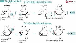 Glykosidische Bindungen