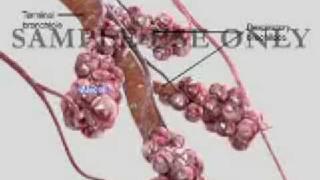 lung alveoli longblaasjes