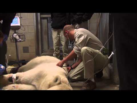 A Day in the Life of a San Diego Zoo Veterinarian