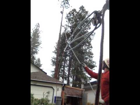 Speed line/zip line large tree removal. Pine tree roping top down on speed line