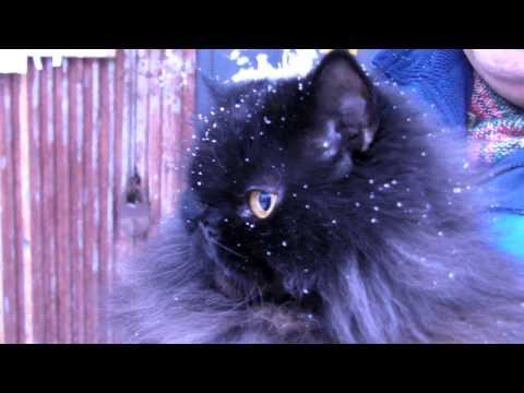 Кирилл первый раз в снегу
