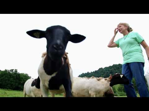 Peaceful Pastures | Lancaster, TN