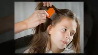 Where Do Lice Come From