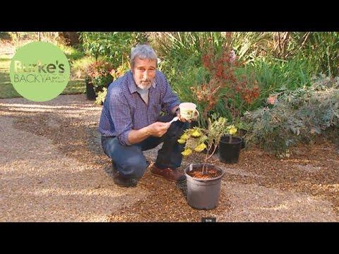 Burke's Backyard, Fertilising Pot Plants