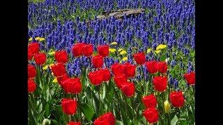 札幌の百合が原公園は、四季折々の美しいお花を堪能させて頂いてますが...