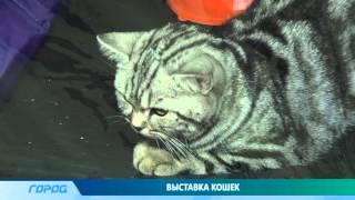 Международная выставка кошек в Нижнем Новгороде
