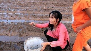 Nước rút, bắt Cua Đồng trên ruộng về nấu Canh Cua Mồng Tơi  | Thôn Nữ Miền Tây