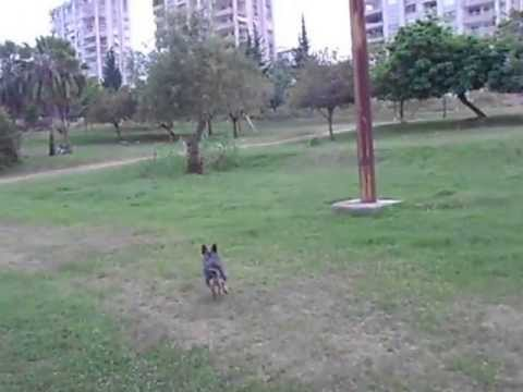 dog travel turkey in adana 13