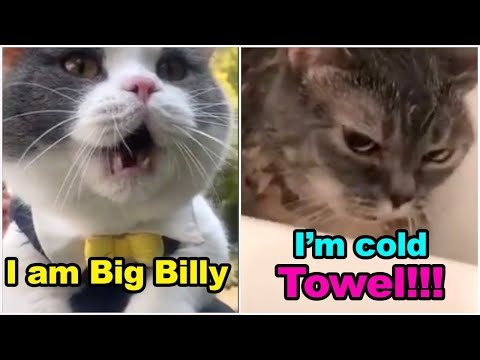 OMG! 🐱These Cats Can Speak English!😂😂  - 'MEOW' Language - Funny Cat's life Video 2020