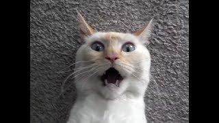 Приколы с котами - самые смешные сюжеты