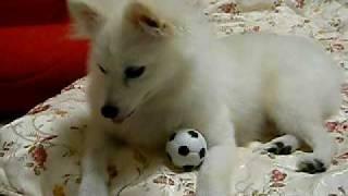 ちょっとサッカーボールでルンとお遊び.