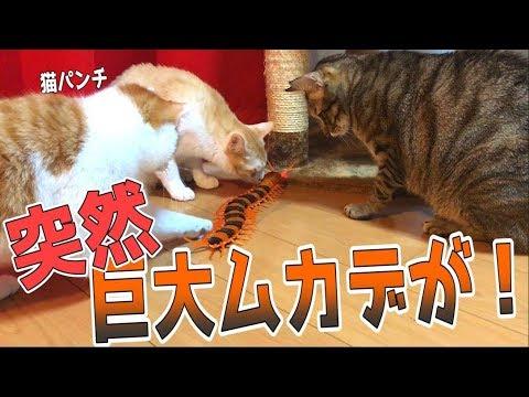 【閲覧注意】巨大ムカデが出現して猫たちが大パニック?!