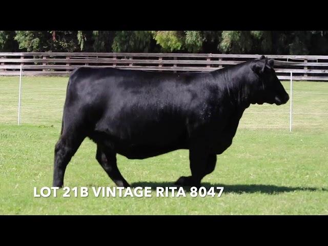 Vintage Angus Lot 21B