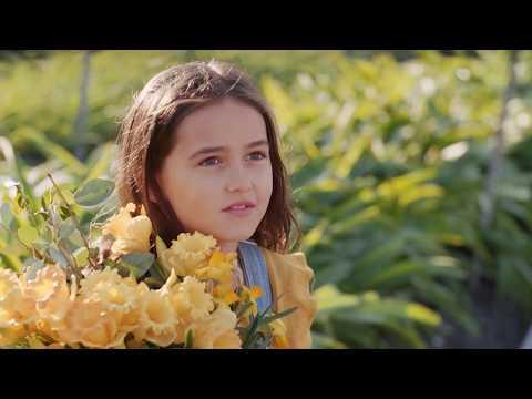 Daffodil Day 2017   Friday 25th August