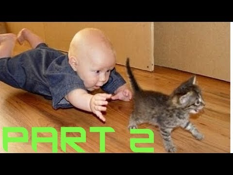 BABIES annoying CATS (PART 2) – Funny baby & cat compilation