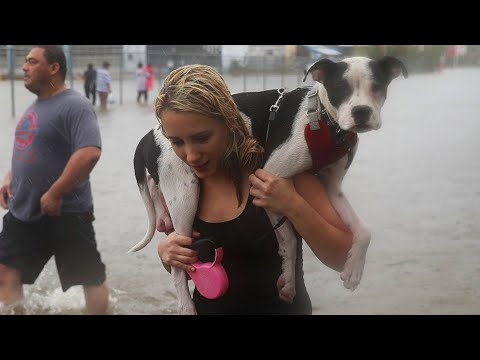 Hurricane Harvey animals; Climate change might be making fish smaller - 8/30/2017