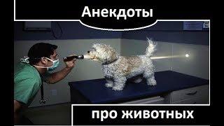 Анекдоты про животных / Смешные приколы от Маши
