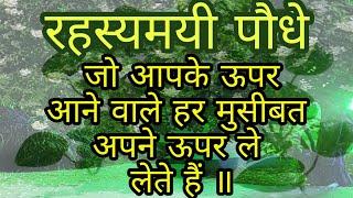 रहस्यमयी पौधे जो आपके ऊपर आने वाली हर मुसीबत अपने ऊपर ले लेते हैं Astrology