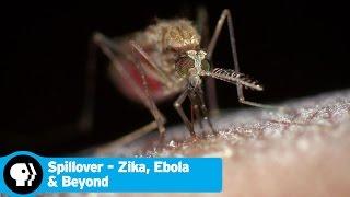 SPILLOVER - ZIKA, EBOLA & BEYOND | Trailer | PBS