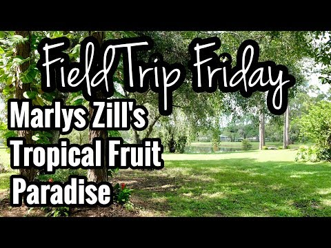 Field Trip Friday- Marlys Zill's Tropical Fruit Paradise!