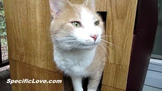 how to remove dry cat urine from mattress