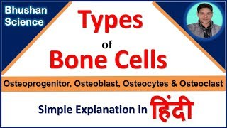 Types of Bone Cells (Cellular Structure of Bone) simple explanation in Hindi | Bhushan Science