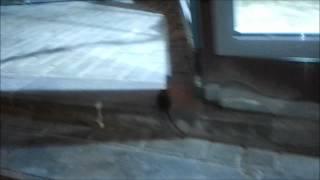 Маленькая серая крыса.wmv