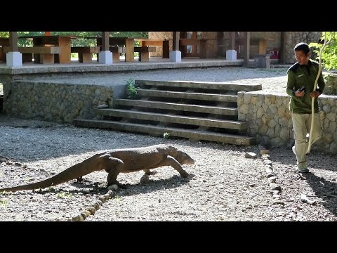 The Dragon Quest, Labuan Bajo and Komodo National Park (Indonesia Part 1)